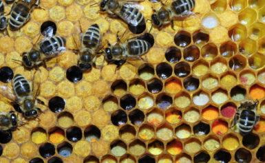 Méhpempő propolisz és virágpor kiszállítás magyarországi méhészetekből