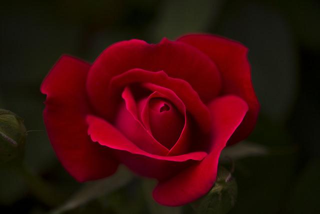 Kimenti a kellemetlen helyzetből a virágküldés Szolnokon