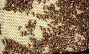 Könnyen elérhető a méhészbolt