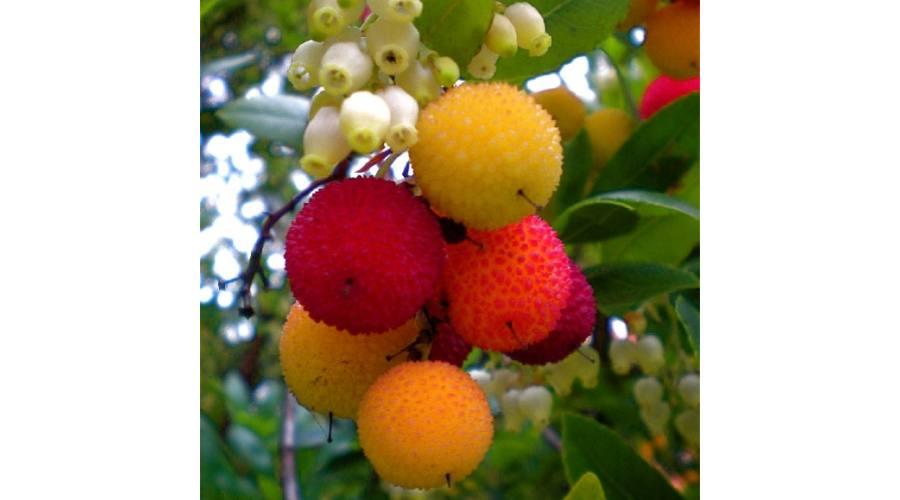 Gyönyörködjön az egzotikus növények szépségében!