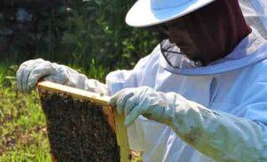 A hosszú élet titka a méhpempő