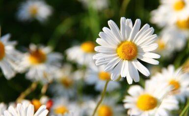 A különleges virágok páratlan gyűjteménye