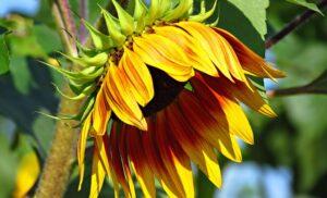 Itt a tavasz, kerti dísznövények rendelhetőek!