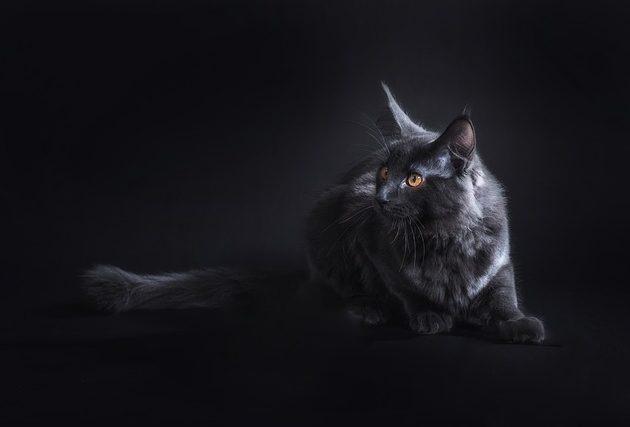 Macskás videók 2021 a macskák világa